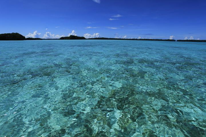 パラオの青い海.jpg